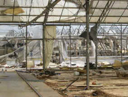 Pictures of greenhouses in the gaza strip