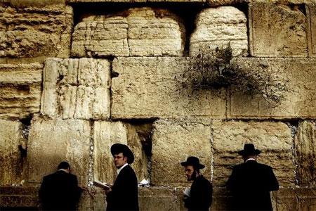 Wall2006