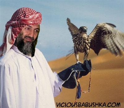 Obl-falcon