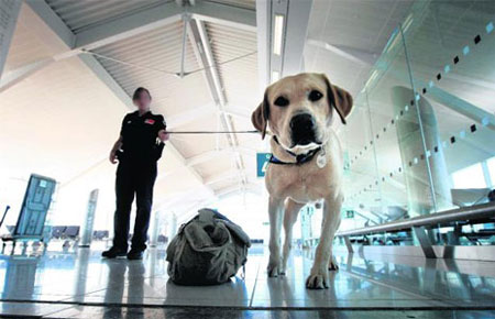 Airportdog
