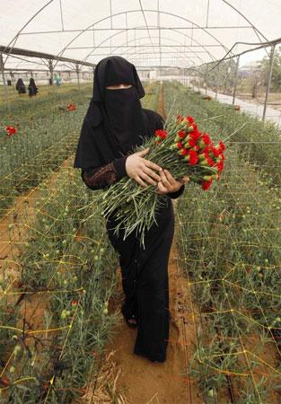 Gaza-strawberrie3
