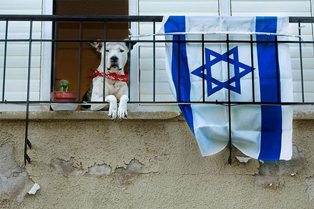 Israelidog