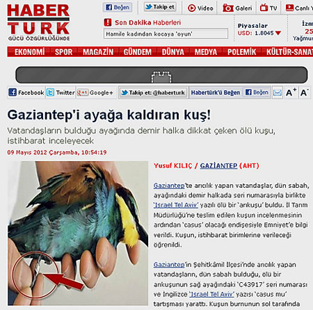 Turkbird